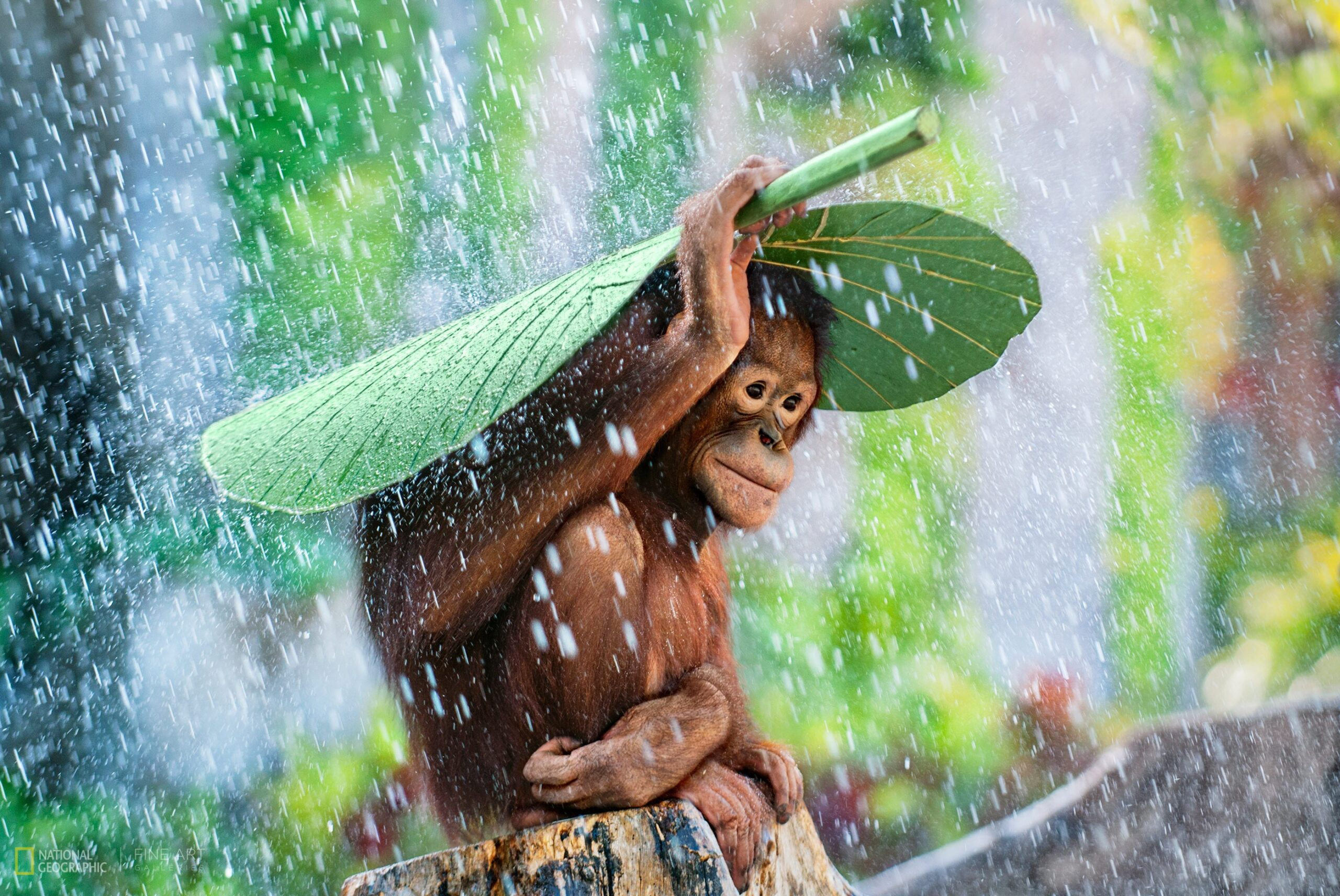 Imagen: National Geographic